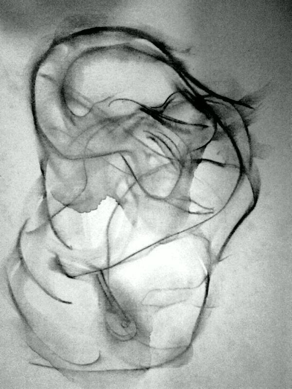 Alien Embryon - Fusain sur papier 1999